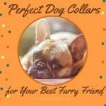 Perfect Dog Collars for Your Best Furry Friend