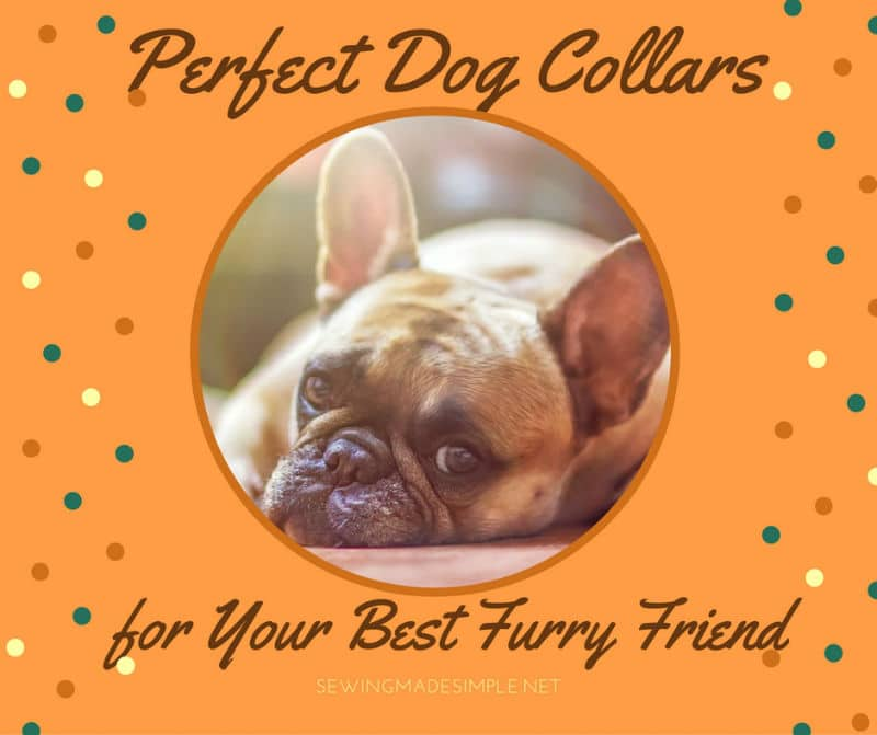 dog-collars-projects
