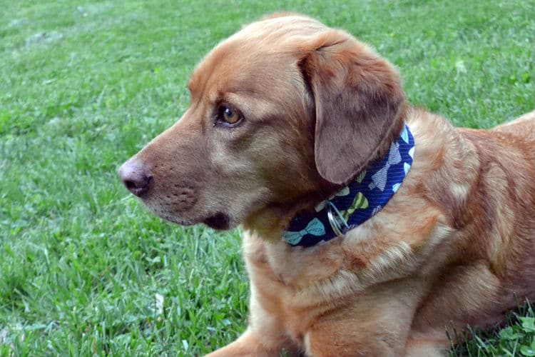Perfect Dog Collars For Your Best Furry Friend U2022sewing Made