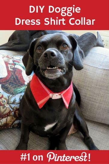 doggie-dress-shirt-collar